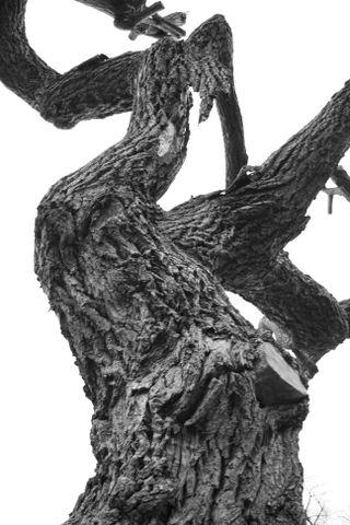 Knarly tree